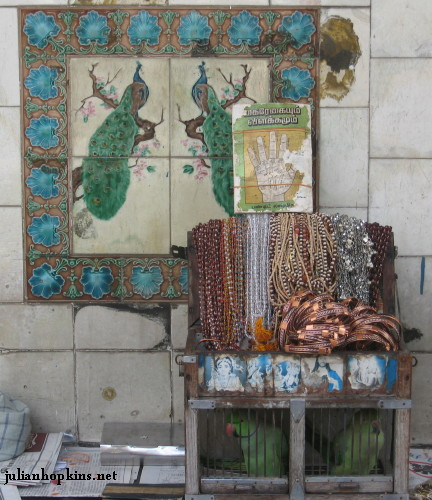 Fortune-telling parrots in front of the peacock tiles of Chettiar House on Lebuh Ampang